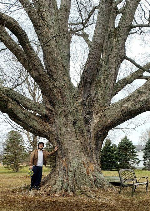 Big Trees in Ohio